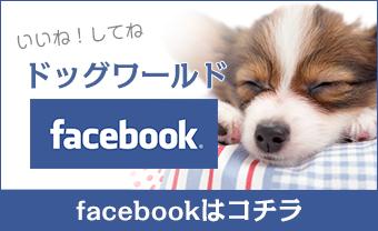 ドッグワールド公式facebook